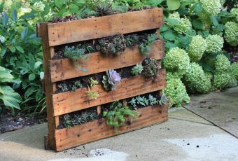 Recycle an old wooden pallet for a vertical garden