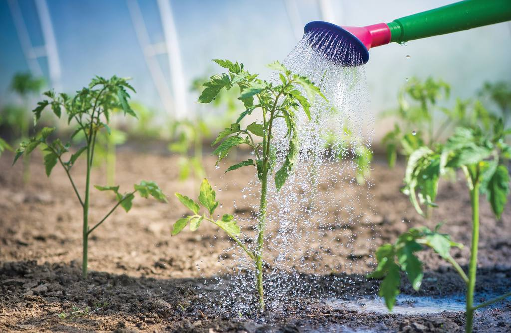 Maintain a watering schedule to prevent rot