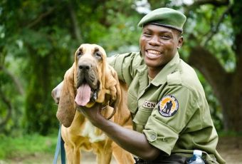 Poacher Hunting Dogs of Congo